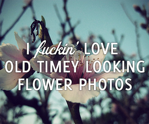 flower, funny, and lol image
