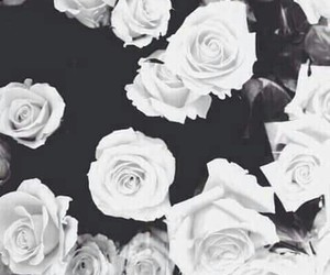 black and white, roses, and wallpaper image