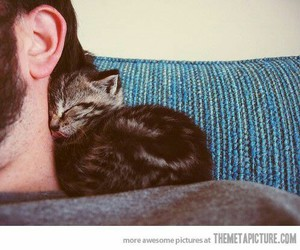 adorable, cat, and cuddle image