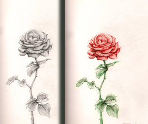 drawing, color, and roses image