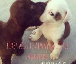 beautiful, dogs, and first kiss image