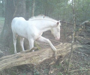 horse, pale, and white image