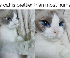 animal, cat, and perfect image