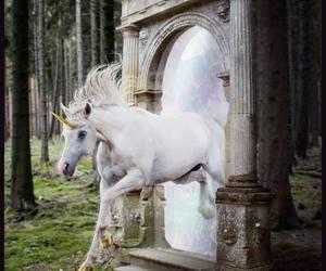 unicorn, fantasy, and horse image