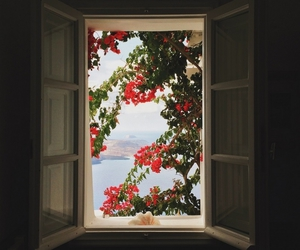 beautiful, flowers, and window image