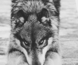 eyes, photo, and white&black image