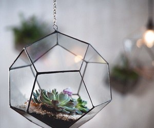 glass, succulents, and plant image