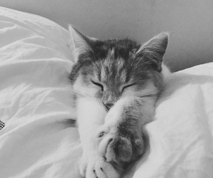 black and white and cat image