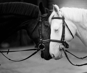 adorable, black, and horses image