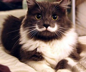 cat, mustache, and animal image