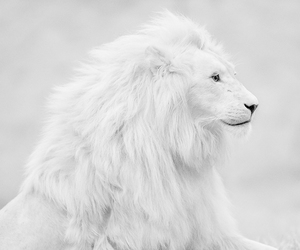 animal, wild, and beautiul image