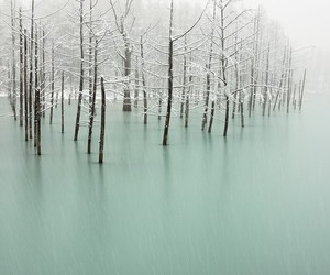 cold, ice, and tree image