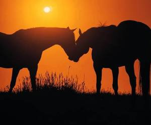 horses, sunset, and kiss image