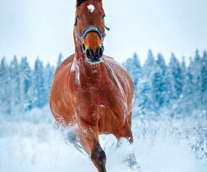 animal, horse, and snow image