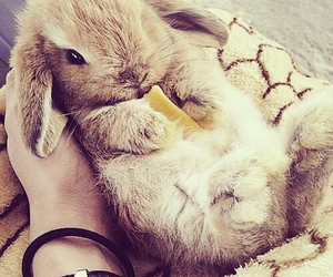 bunny, cute, and fluffy image