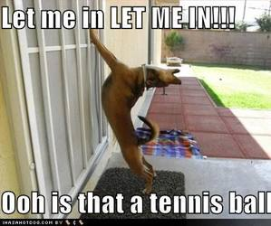 dogs, funny, and olo image