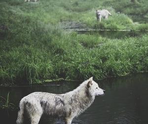 Image by Sasha Mist