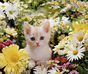 flowers, kitten, and cat image