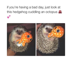 hedgehog, octopus, and cute image