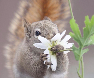 squirrel, flowers, and animal image