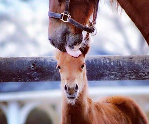 horse, love, and animals image