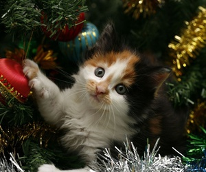 christmas, cat, and tree image