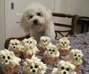 dog, cupcake, and puppy image