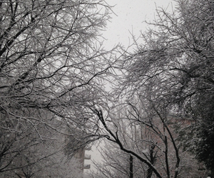 black, snow, and tree image