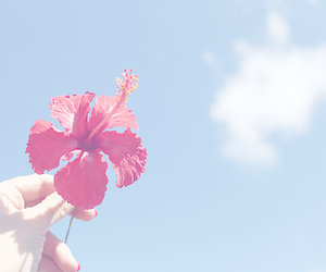 flowers, indie, and sky image