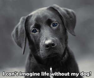 dog, life, and adorable puppy image