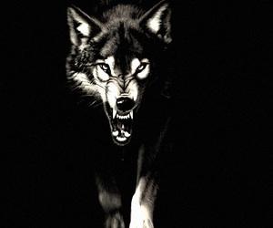 black and white, sharp teeth, and predator image