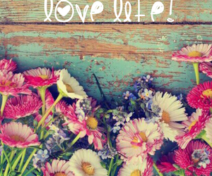 colors, daisies, and vintage image
