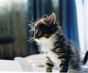 adorable, eyes, and kittens image
