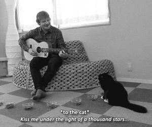 cat, ed sheeran, and black and white image