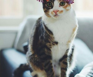 cat, flowers, and animal image