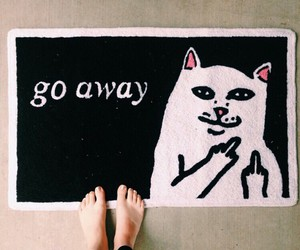 carpet, cat, and fuck image