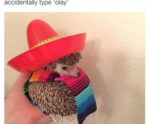 funny, olay, and okay image