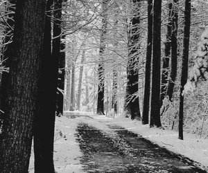 bw, photography, and snow image