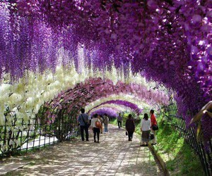 flowers, japan, and place image