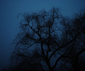 tree, blue, and dark image