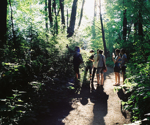 nature, forest, and friends image