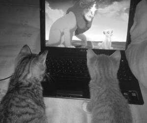 cat, cute, and the lion king image