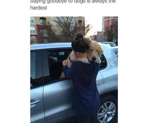 dog, goodbye, and love image