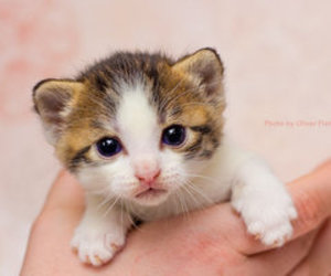 cats, baby animals, and cute animals image