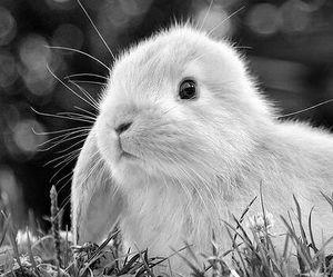 rabbit, bunny, and animal image
