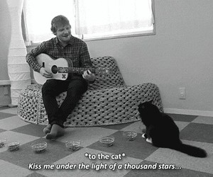 cat, ed sheeran, and black and white image