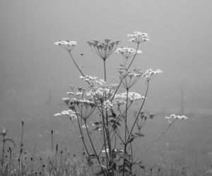 fog, seitinger, and plant image
