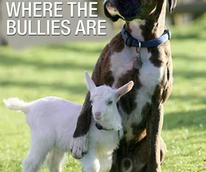 dogs, bullies, and funny image