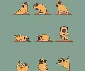 yoga, dog, and pug image
