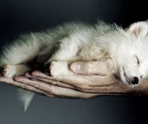 cute, wolf, and dog image